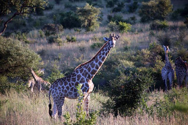 séjour en afrique du sud