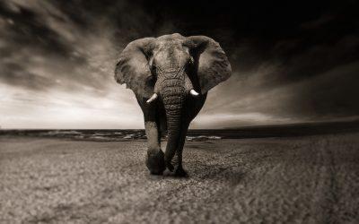 Safari en Afrique du Sud : 3 parcs à explorer pour admirer la faune