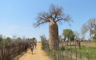 Un voyage sur mesure au huitième continent, Madagascar