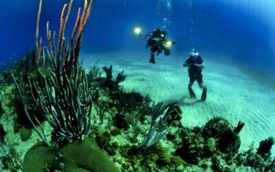 Les meilleurs spots de plongée sous marine en Guadeloupe
